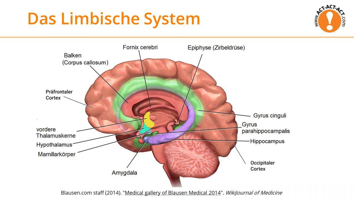 Psychologie Aufnahmetest Kapitel 9: Das limbische System