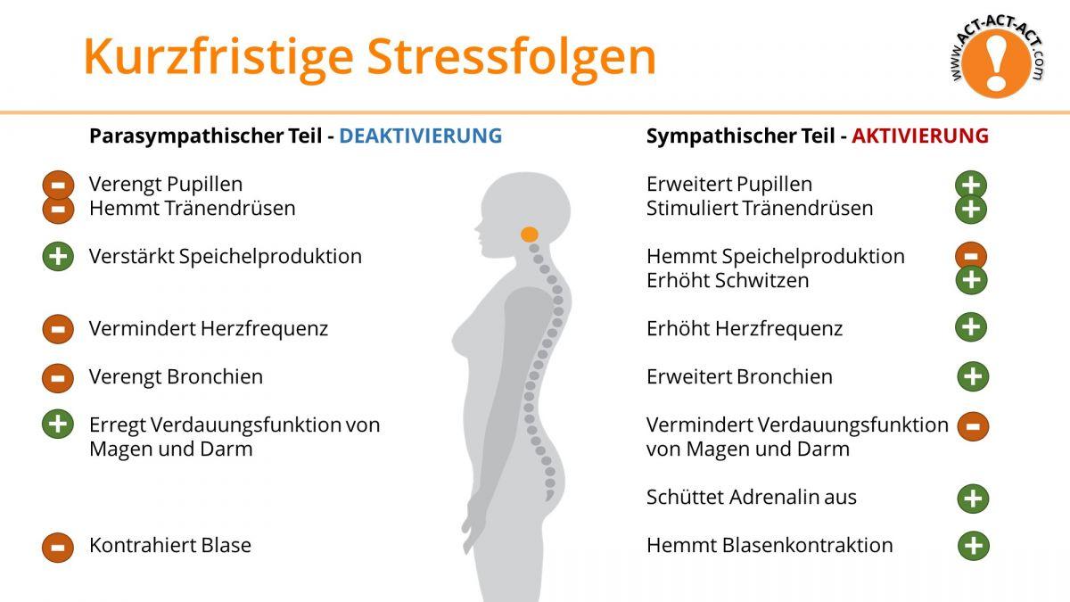 Psychologie Aufnahmetest Kapitel 12: Kurzfristige Stressfolgen