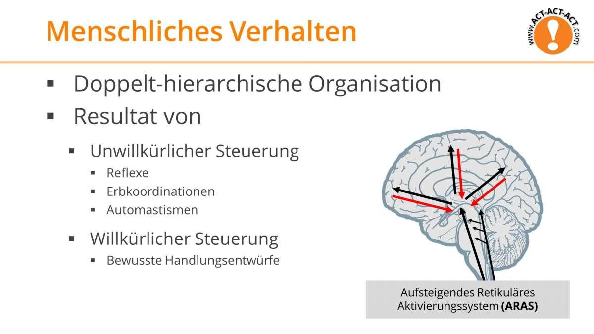 Psychologie Aufnahmetest Kapitel 6: Menschliches Verhalten
