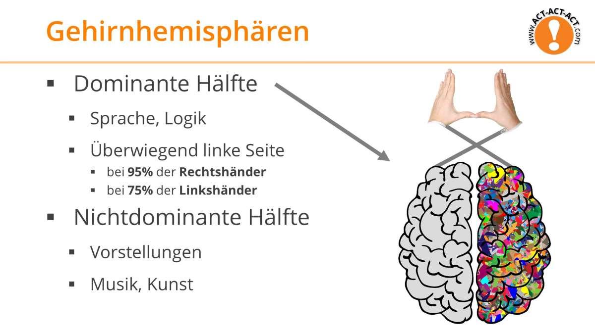 Psychologie Aufnahmetest Kapitel 6: Gehirnhemisphären